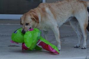 Hanna har fanget et vilddyr